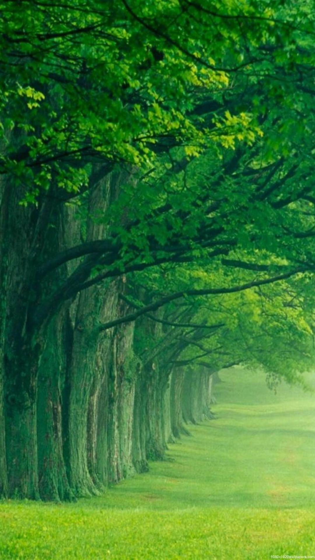 Nature wallpaper for android phones